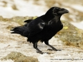 Raven-Gary-Jones