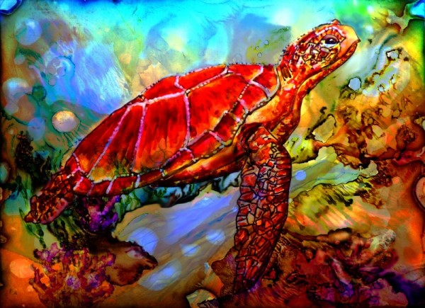 turtle-cleanedup-8