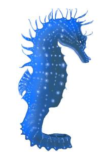 blue-seahorse-flattened-glow-2